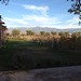 Small photo of Vineyard View, Alta Vista