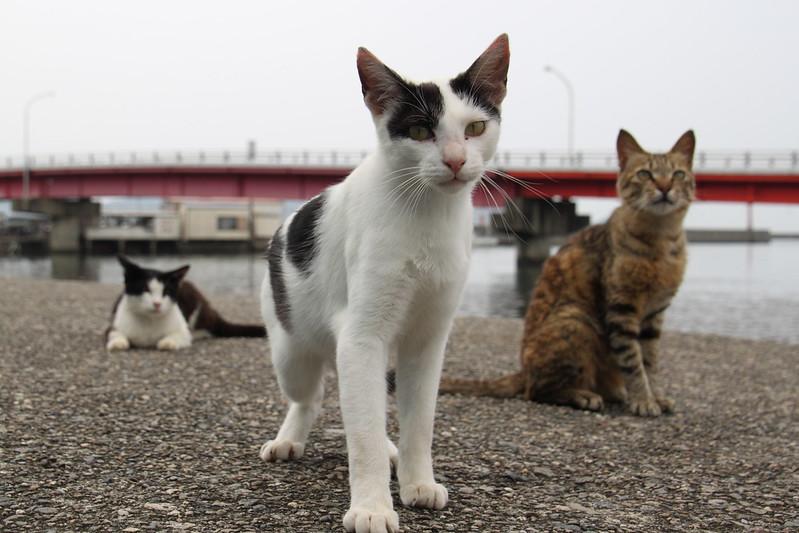 港町の三匹の猫たち