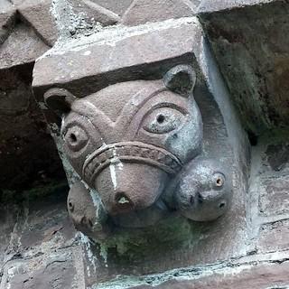 Bear:  muzzled devourer