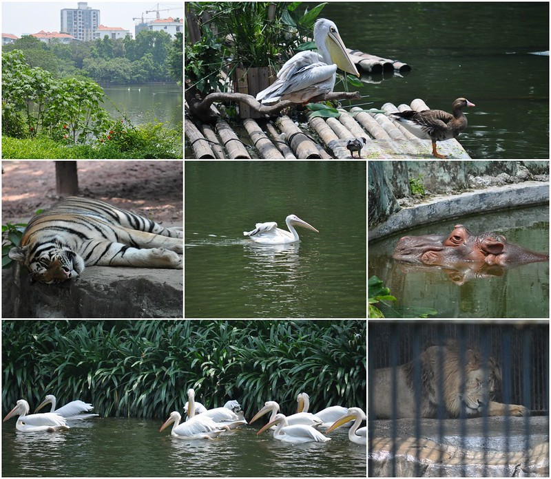 Zoo Collage 3