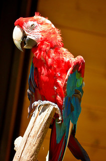 Image of インコ near Hino. zoo 動物園 tamazoo tamazoologicalpark 多摩動物園