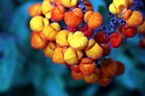 Butchart Gardens - Berryish Things