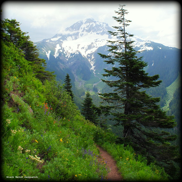 Bald Mountain Loop Trail - Mt. Hood