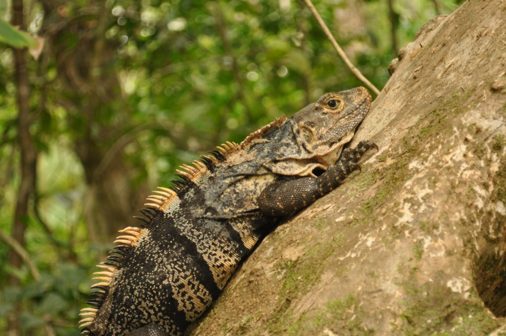 Parque Nacional de Manuel Antonio en Costa Rica Parque Nacional Manuel Antonio en Costa Rica, el más pequeño y más popular - 7734683456 5be739c695 o - Parque Nacional Manuel Antonio en Costa Rica, el más pequeño y más popular