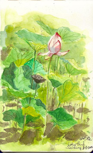 Live Sketch of Lotus in Sai Kung 西貢荷花池