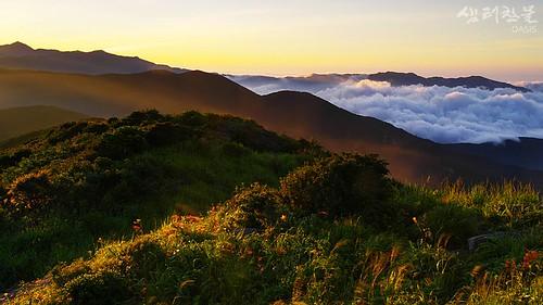 park flowers mountain clouds landscape national wildflowers jirisan jirisannationalpark 645d mtjiri oasisframe