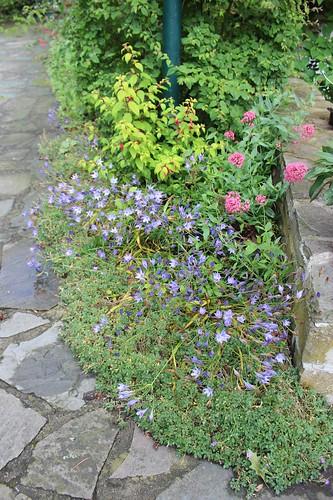 Le jardin de Laurent - Page 2 7752051632_24c21a6200