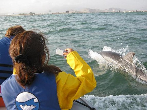 Dolphinwatching in Peru with Nature Expeditions 13