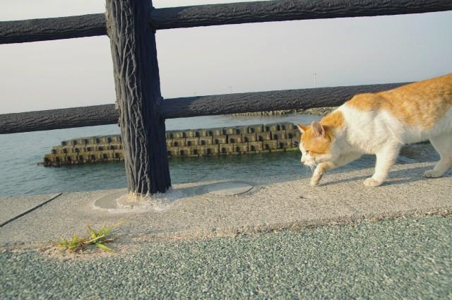 cat (23)