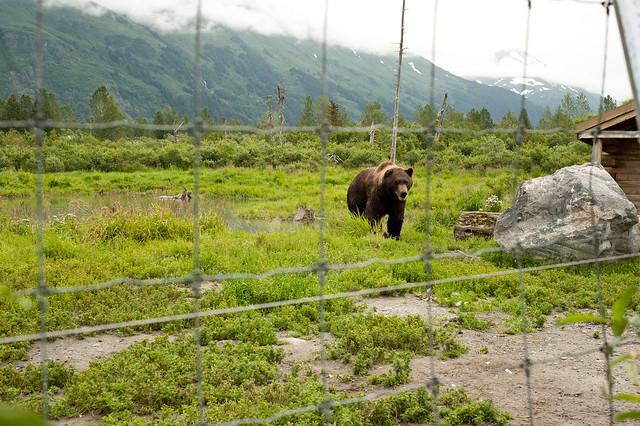 Alaska97 (1 of 1)