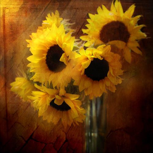 Sunflower Still life by Jeanturnercain