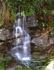 wasserfall(0.0), stream(1.0), waterfall(1.0), rainforest(1.0), water feature(1.0), water(1.0), creek(1.0), body of water(1.0), watercourse(1.0),