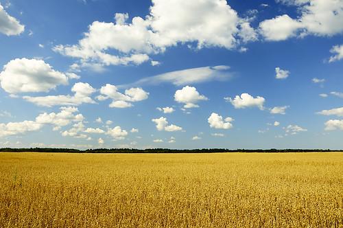 [フリー画像素材] 自然風景, 田園・農場, 青空 ID:201209050600