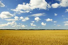 [Free Images] Nature, Field / Farm, Blue Sky ID:201209050600