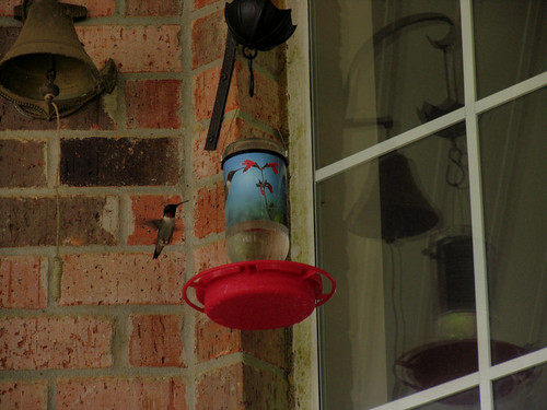 CrabAppleLane Hummingbird - Gearing up for Hurricane Isaac - August 28, 2012