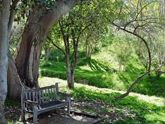 Sit Awhile, Batanical Gardens, Riverside, CA 2015