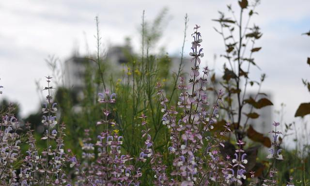Sommer 2012 Prinzessinnengarten