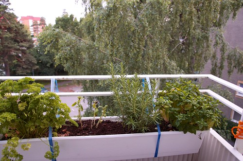 Herb garden in the balcony