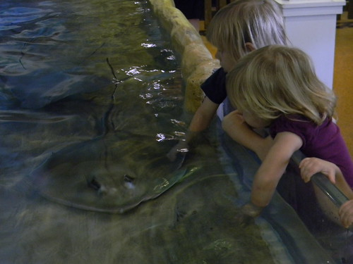 touching stingrays