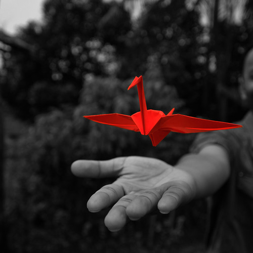 Paper Red 33 Photos | 7/365: Letting go | 160