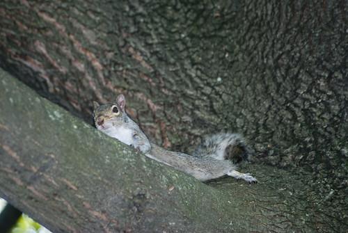 Squirrel2012071563a