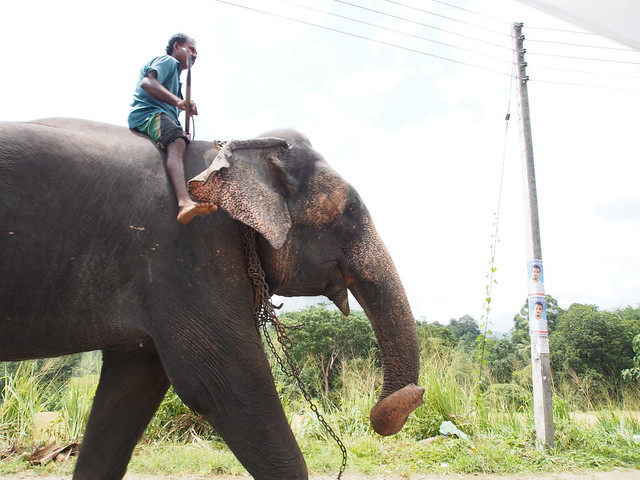 Elephant on National Road
