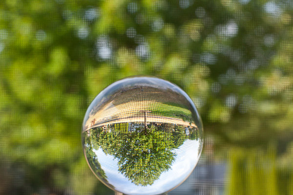 Crystal Ball Photography - Red Maple