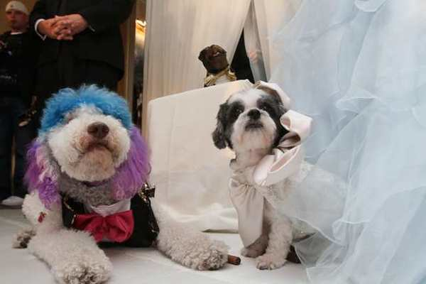 New Guinness World Record: Most Expensive Pet Wedding
