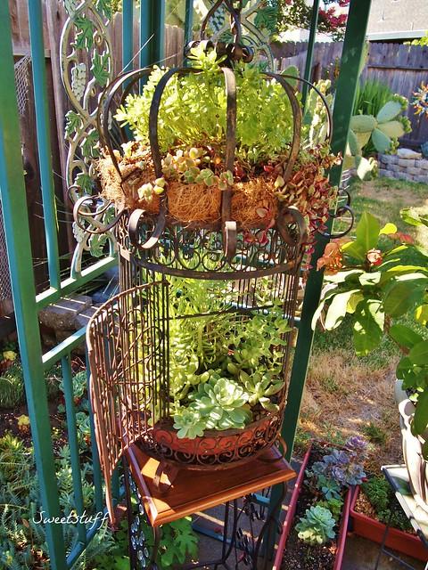 Succulent Bird Cage