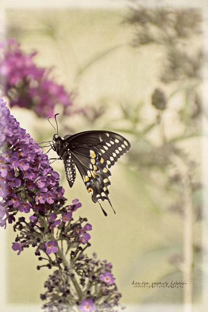 Butterfly Summer III