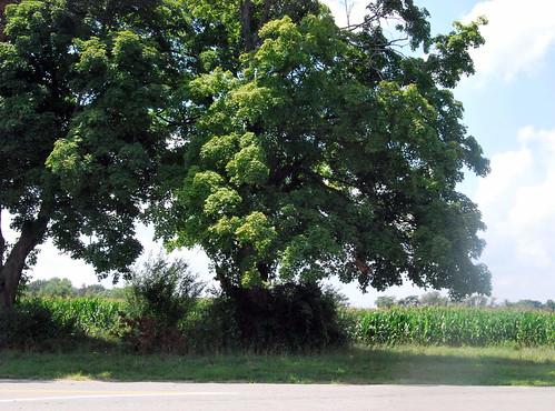 WPIR - tree of life
