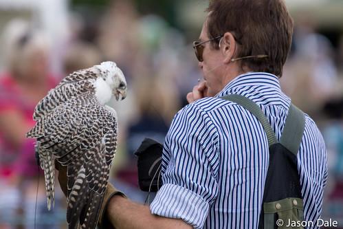 Ben Long Falconry Display