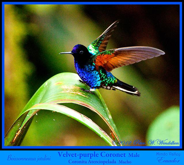 Birds on stamps Guyana  birdthemeorg