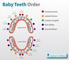 baby-teeth-order