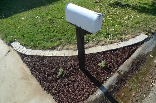 mailbox garden after