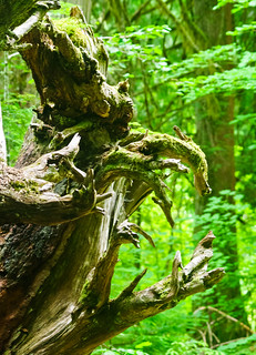 Ogre in the Wood