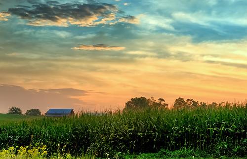 [フリー画像素材] 朝焼け・夕焼け, 田園・農場 ID:201208130600