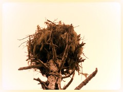 nest, branch, brown, wood, bird nest, twig,