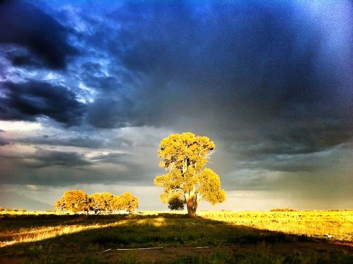 Colorado Tree