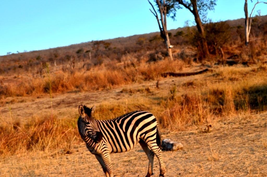 Zebra Stanley and Livingstone Resort
