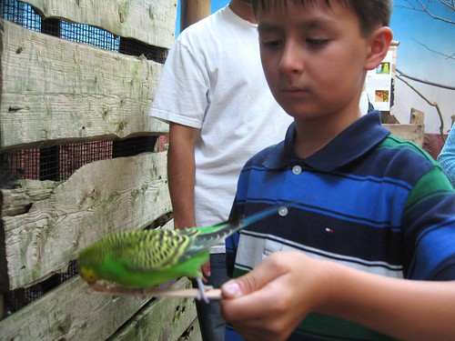 Feeding the bird at Woodland Park zoo.