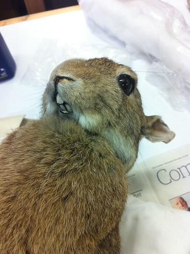 Bunny bites