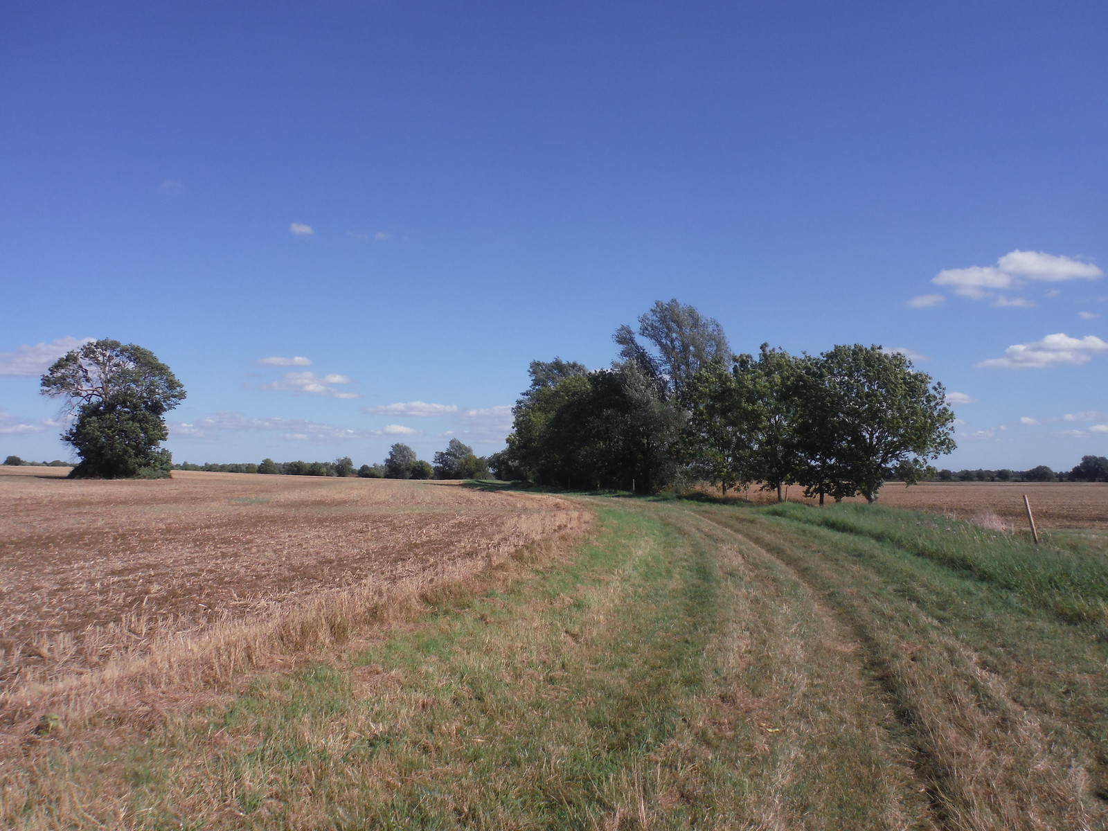 Along the Burying Way (Stretham to Little Thetford) SWC Walk 118 Ely Circular