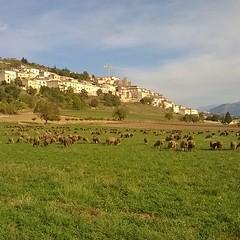 #gregge #pecore #navelli #laquila #abruzzo #italia #ovini #borghipiubelliditalia #nature #borghi