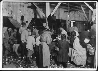 Oyster shuckers at work. Small girls working on right of photo are Gertrude Kron, 5 years old, and Pauline, 8 years old, February 1911
