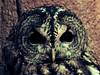 Owls by ★☆KIU WORLD☆★