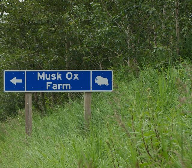 musk ox farm?