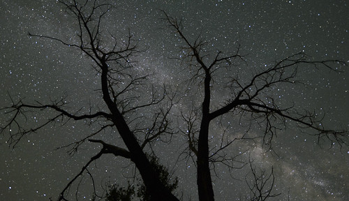 """Dead Tree"" II - Milky Way"