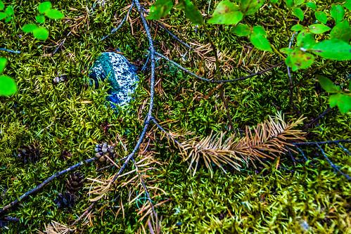 Blaue Spur; copyright 2012: Georg Berg
