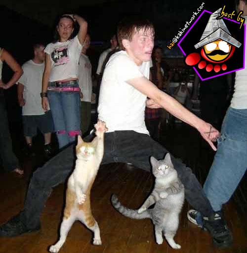 gambar kucing 00
